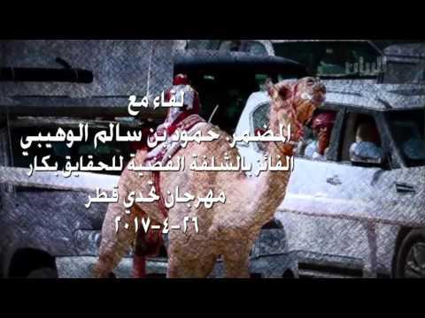لقاء مع المضمر. حمود بن سالم الوهيبي الفائز بالشلفة الفضية للحقايق بكار مهرجان تحدي قطر ٢٦-٤-٢٠١٧
