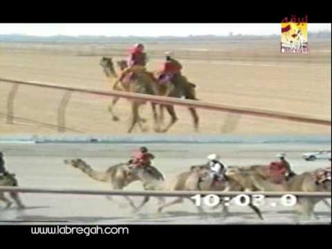 شديده سعادة الشيخ فهد بن عبدالله آل ثاني ( السيف الذهبي للحيل شيوخ ختام المرموم ٢٤-٣-١٩٩٥) دبي