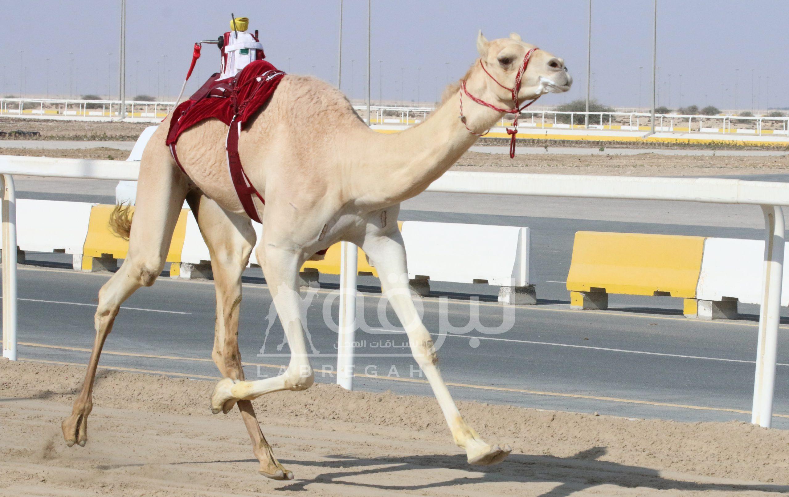 """""""عتب"""" الشحانية تفوز بناموس اللقايا بكار.. و""""فجاج"""" الغرافة ينفرد بقمة القعدان"""